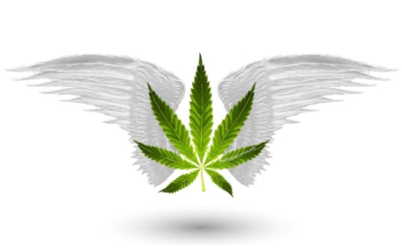 marijuana games barcelona buy weed