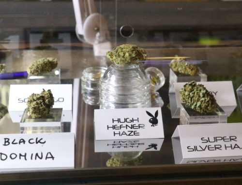 Cannabis Clubs Reviews in Barcelona