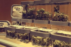 Marijuana Strains in jars