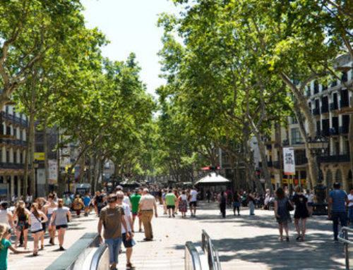 Le Marché Noir du Cannabis à Barcelone | Cannabis Barcelona