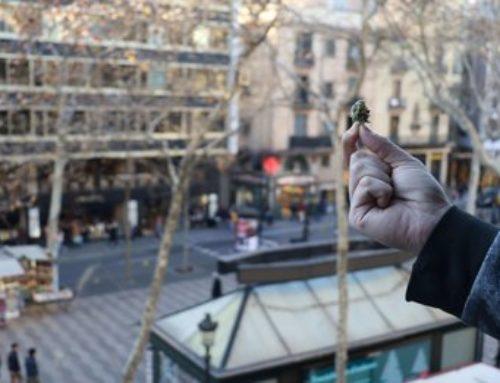 Tourisme du Cannabis à Barcelone | Cannabis Barcelona