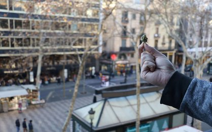 Marijuana nugget in las Ramblas of Barcelona