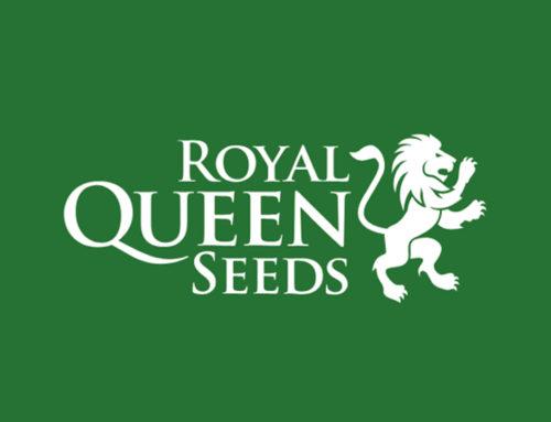 Avis de Royal Queen Seeds