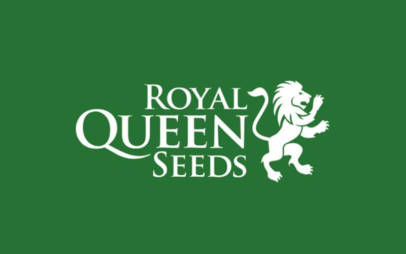 royal queen seeds barcelona