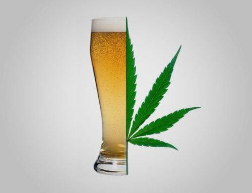 Cannabis Vs. Alcohol | Cannabis Barcelona