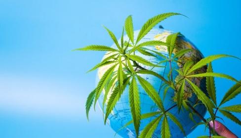 marijuana plant next to earth globe