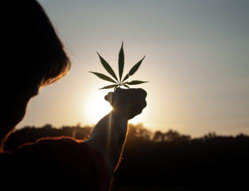 Dans quels pays est légale la weed marijuana